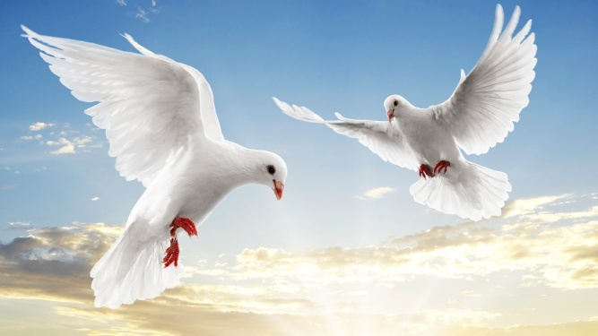 Peace-Dove-Pictures-Images-Photos.jpg
